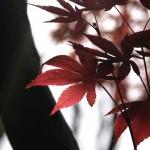 2014上高地紅葉の時期。見ごろ予想!エルニーニョ現象の影響は?